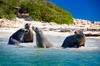 Penguin Island Tour with Dolphin and Sea Lion Cruise