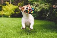Pet Supplies Plus - Store...