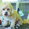 $20 For $40 Toward Grooming Services For Standard-Size Dogs