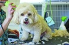 Dapper Dog - Corbin City: $20 For $40 Toward Grooming Services For Standard-Size Dogs