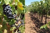 Private Wine Tasting Tour From Santa Ynez, Solvang or Buellton!