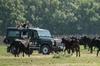 La Camargue en safari VIP en 4x4 au départ d'Arles