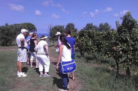 Promozione Tour & Giri Turistici Groupon.it Tour di Messina, azienda vinicola e spiaggia