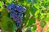 Ruta del Vino en Valencia: Bodegas, Catas y Comida