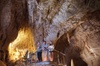 Small-Group Waitomo Ruakuri Caves and Kiwi Experience Tour from Auc...