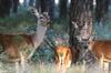 Excursión privada al Parque Nacional de Doñana y El Rocío: Recorrid...