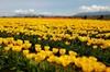 Skagit Valley Tulip Festival and Deception Pass - Private Luxury Da...
