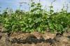 Dégustation de vin - Région de la côte de Nuits, avec visite d'une ...