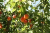 Melbourne Private Fruit Picking Tours (Up to 11 Persons)