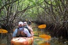 Manatees and Mangrove Tunnels