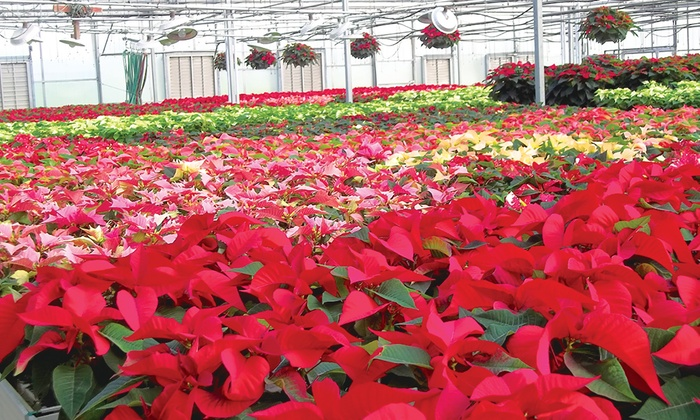 10 for 20 toward flowers garden supplies - Garden Harvest Supply