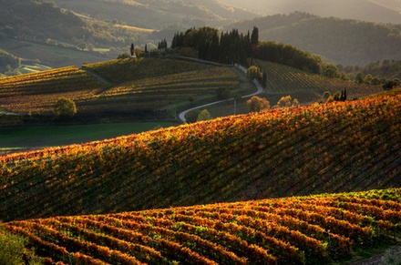 Escursione in Toscana da Siena con degustazione di vini