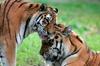 Billet coupe-file pour le zoo de Jurques
