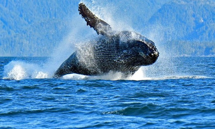 A Whales Song Expeditions dba... - A Whales Song Expeditions dba M ...