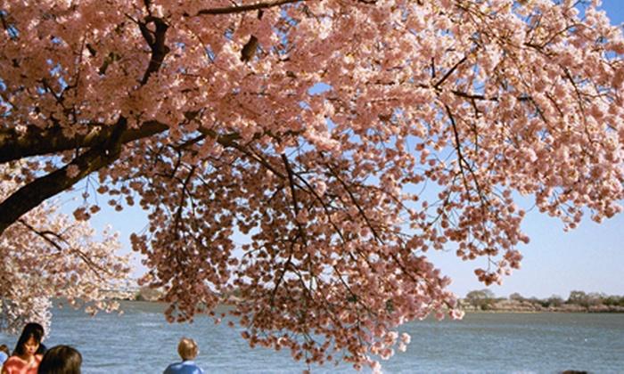 DC Metro Area - Southwest Employment Area: Blossom Secrets Stroll Walking Tour at DC Metro Area