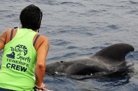 2 HORAS: crucero de avistamiento de delfines y ballenas en Tenerife a bordo de la Bahriyeli
