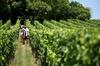 Offre combinée Bordeaux: Excursion vins du Médoc et déjeuner, et S...