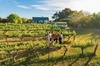 Barossa Valley Highlights from Barossa Valley Including Wine and Ch...