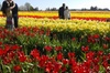 Tulip Festival and Skagit Valley Tour