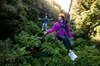 New Zealand's Ultimate Ziplining Eco Canopy Adventure Tour