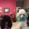 $20 for $40 Towards Grooming Services