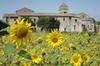 Tour privé en Provence: sur les traces de Van Gogh