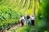 Hobart: Highlights of Tasmanian Wine Full Day Tour