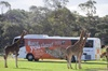 Monarto Safari Park Bus transfers from Adelaide City