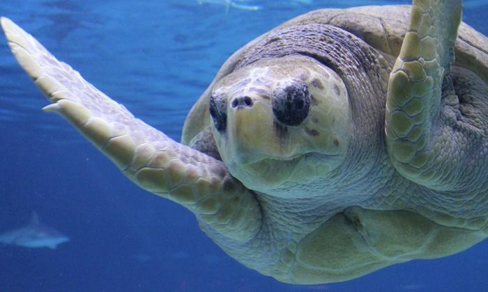 Adventure Aquarium - Cooper Grant: Adventure Aquarium at Adventure Aquarium