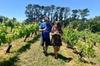 Kumeu Wine Adventure