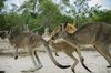 Skip the Line: Australia Walkabout Wildlife Park General Admission ...