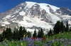 Mt. Rainier Tour From Downtown Seattle