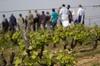 Excursion à la découverte d'un vignoble, d'un domaine vinicole et d...