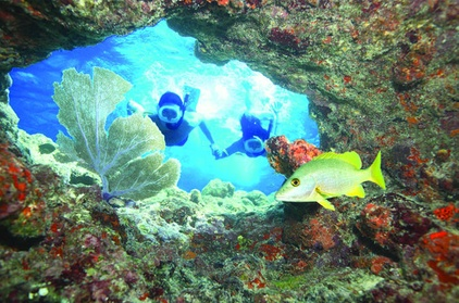 Key West Living Coral Reef Snorkel Adventure a8fa7168-d204-4c9d-a9a7-a350ce4bf665
