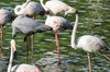 Visita guiada en 4x4 al Parque Nacional de Doñana y El Rocío desde ...