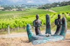 Learn about biodynamics and wine production in McLaren Vale