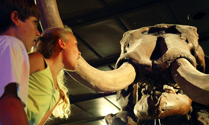 Houston Museum of Natural Science - The Museum District: The Houston Museum of Natural Science