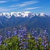 Full-Day Guided Hurricane Ridge Tour in Olympic National Park