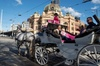 Melbourne Horse Drawn Carriages 30 Minute Garden tour