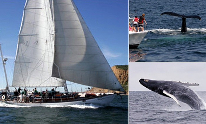 Sheraton San Diego Hotel & Marina - Midway District: Whale Watching on the Yacht Jada at Sheraton San Diego Hotel & Marina