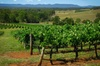 Hunter Valley Wineries Small-Group Tour