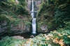 Afternoon Half-Day Multnomah Falls and Columbia River Gorge Waterfa...