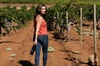 8-Hour Exclusive Wine Tour Experience for up to 6 Guests / Napa-Sonoma