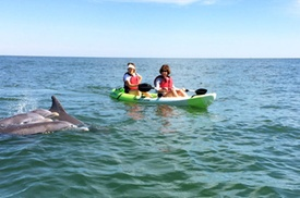 Small Group Dolphin Kayak Eco-Tour at Chesapean Outdoors, plus 6.0% Cash Back from Ebates.