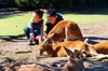 Caversham Wildlife Park, Old Guildford Town & Swan Valley (Private)...