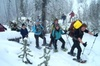 Snowshoe Tour - Scenic Winter Adventure Through Forest