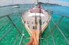 Vigilant Yacht Charters - Sailing Bay of Islands