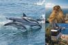 Excursión de avistamiento de delfines en Gibraltar con entrada opci...