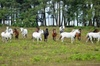 New Forest & Salisbury Day Tour from Southampton