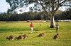 'Aussie Wildlife, Parks and Sunset Tour'